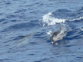 delfini2