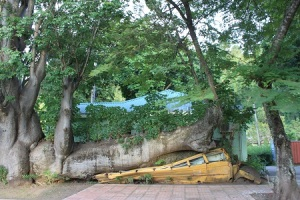 Botanical Garden - school bus after the hurricane