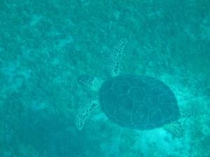 Underwater in the Baie du Colombier