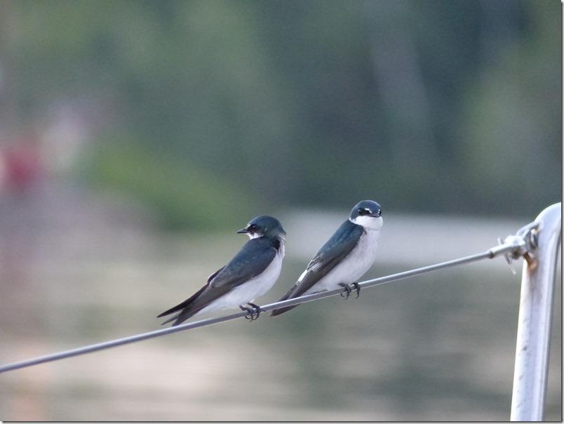 Dec 12th - Birds at Pedregal Marina